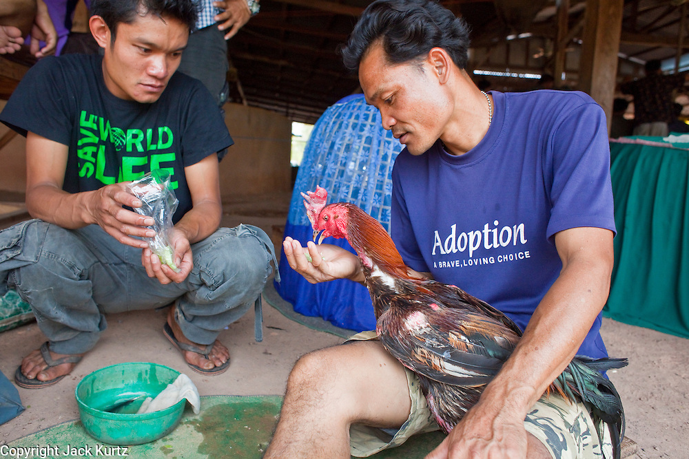 10 APRIL 2010 - PLA PAK, NAKHON PHANOM, THAILAND: A man feeds his fighting cock by hand after a fight at a pit in rural northeastern Thailand. Cockfighting is enormously popular in rural Thailand. A big fight can bring the ring operator as much as 200,000 Thai Baht (about $6,000 US), a large sum of money in rural Thailand. Fighting cocks live for about 10 years and only fight for 2nd and 3rd years of their lives. Most have only four fights per year. Fighting cocks in Thailand do not wear the spurs or razor blades that they do in some countries and most times the winner is based on which rooster stops fighting or tires first rather than which is the most severely injured. Although gambling is illegal in Thailand, many times fight promoters are able to get an exemption to the gambling laws and a lot of money is wagered on the fights. Many small rural communities have at least one cockfighting arena.   PHOTO BY JACK KURTZ