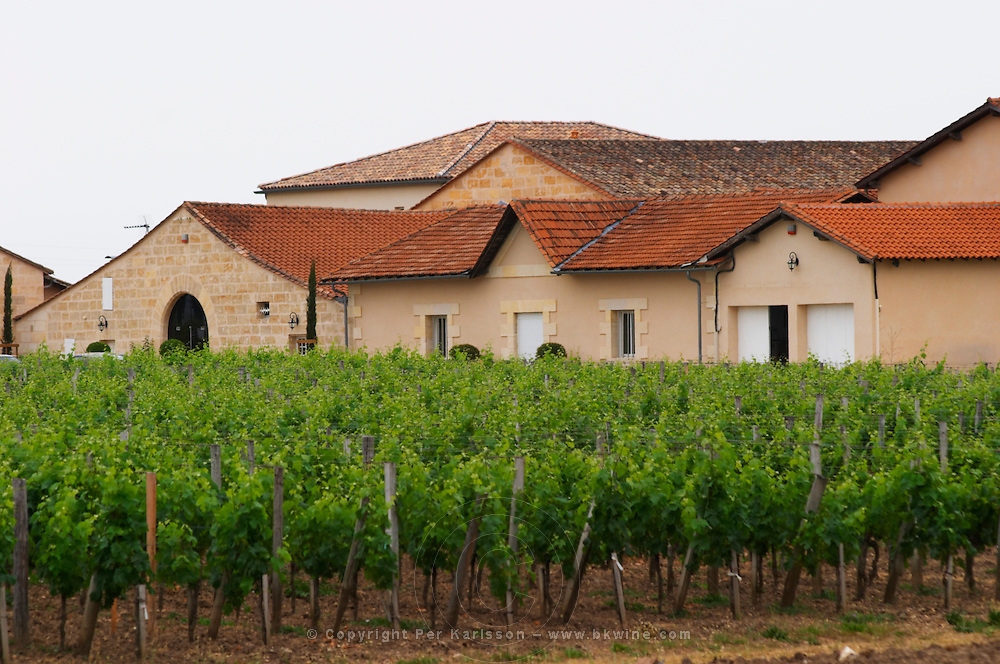 Chateau la Conseillante, in the foreground the vineyard Pomerol Bordeaux Gironde Aquitaine France