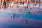 Shoreline reeds and clouds reflection, evening light, October, Schoolcraft Lake, Hubbard County, Minnesota,, USA