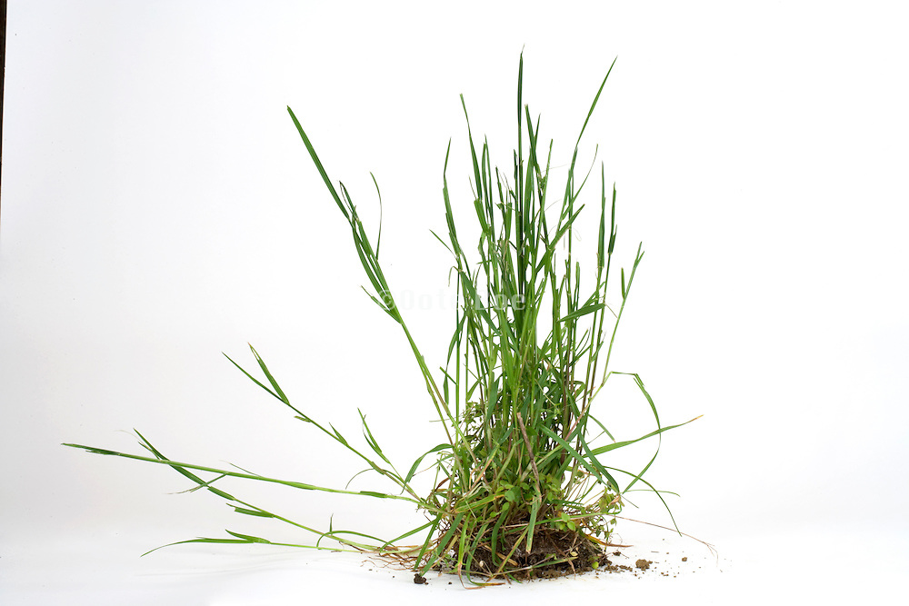 wild grass and soil