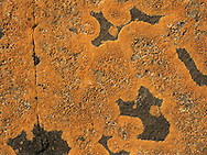 Orange Sea Lichen - Caloplaca Marina
