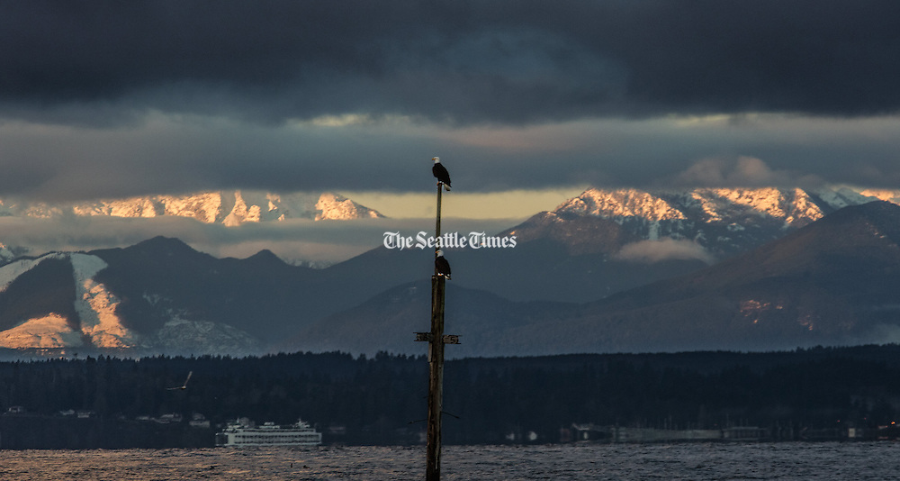 A pair of bald eagles stands guard at the Edmonds Ferry Terminal as a winter sunrise shines on the Olympics. (Steve Ringman/The Seattle Times)