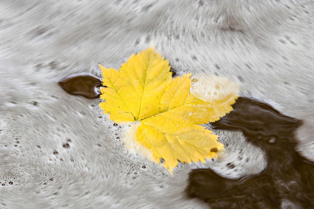 Fall color at Pictured Rocks National Lakeshore in Munising Michigan.