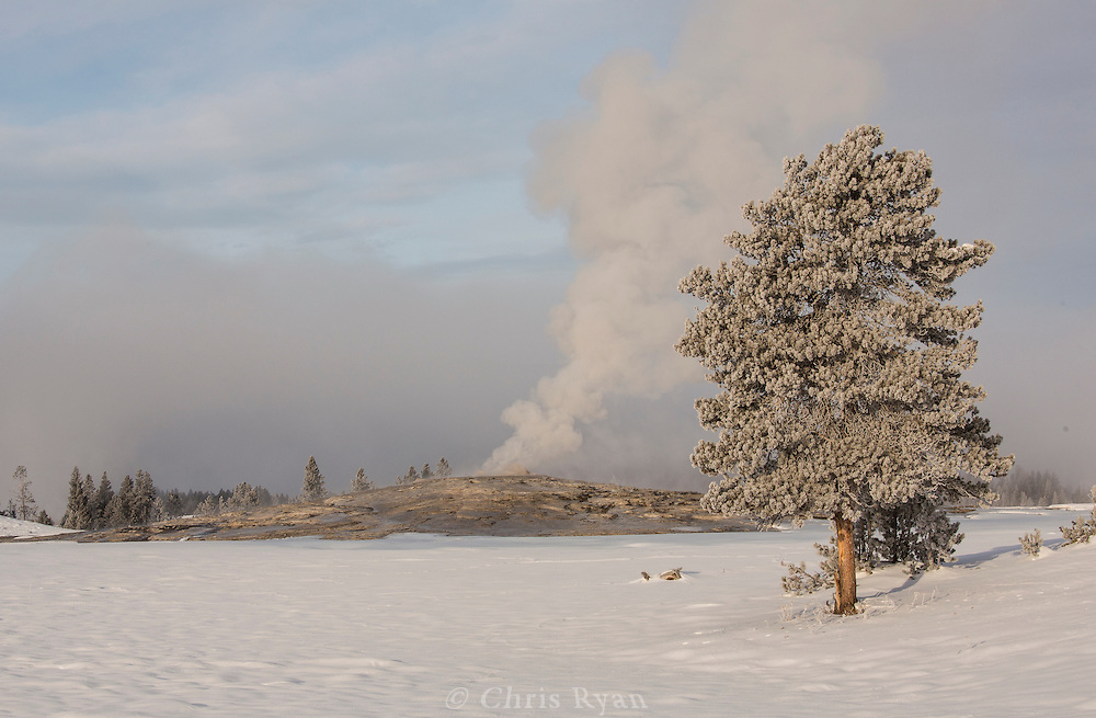 Old Faithful Geyser in winter, Yellowstone National Park