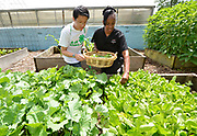 4-H ambassador Caleb Kinzinger, 16, from Freeburg, Ill and Jackie Joyner Kersee pick vegetables for a salad at the urban garden on Thursday, May 30, 2019 in East St. Louis, Ill. (Tim Vizer/AP Images for National 4-H Council)