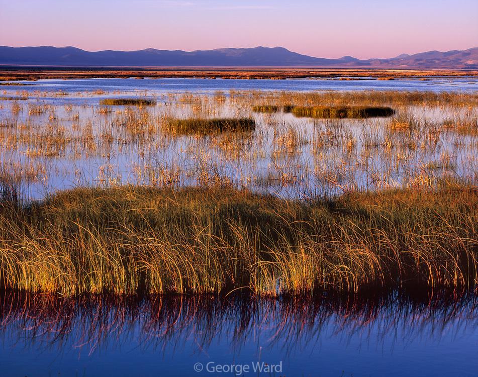 Ruby Marsh at Sunrise,Ruby Lake National Wildlife Refuge, Nevada