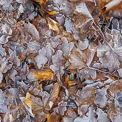 """Folhas congeladas (Planta) fotografado na Alemanha, na Unição Européia - Europa. Registro feito em 2016.<br /> ⠀<br /> <br /> ENGLISH: Frozen Leafs photographed in Germany, in European Union - Europe. Picture made in 2016."""""""