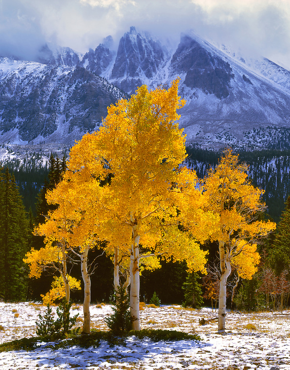 Aspens below Jeff Davis Peak, Great Basin National Park, Nevada