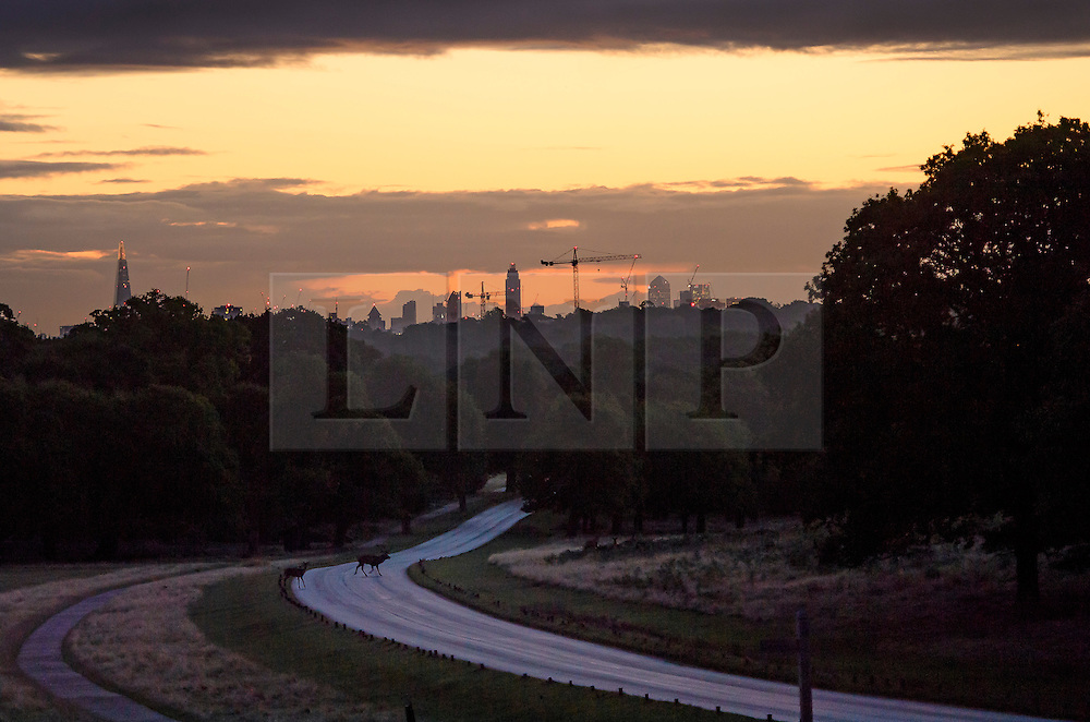 © Licensed to London News Pictures. 09/10/2016. London, UK. A stag makes it's way across a road in front of the city scape of London, seen above trees in Richmond Park at sunrise on an autumn morning. . Photo credit: Ben Cawthra/LNP