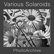 VARIOUS & VARIATIONS - Abstract Polaroid Art Photos by Photographer Paul E Williams
