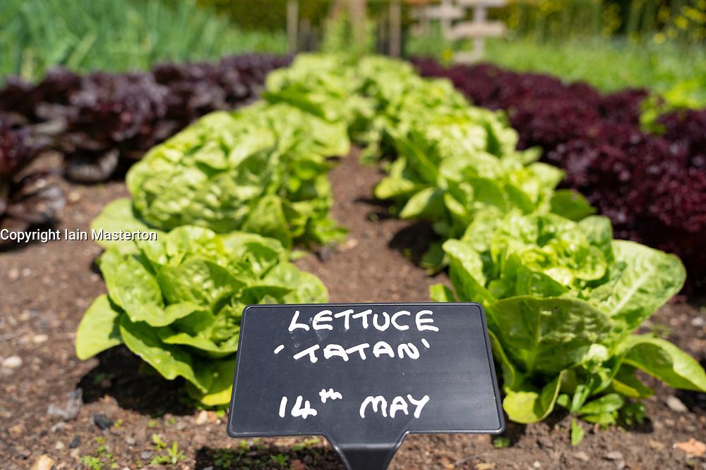 The vegetable garden at NTS Geilston Garden in Cardross, Argyll and Bute, Scotland, UK