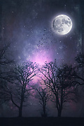 Full moon over tree silhouettes - manipulated photograph