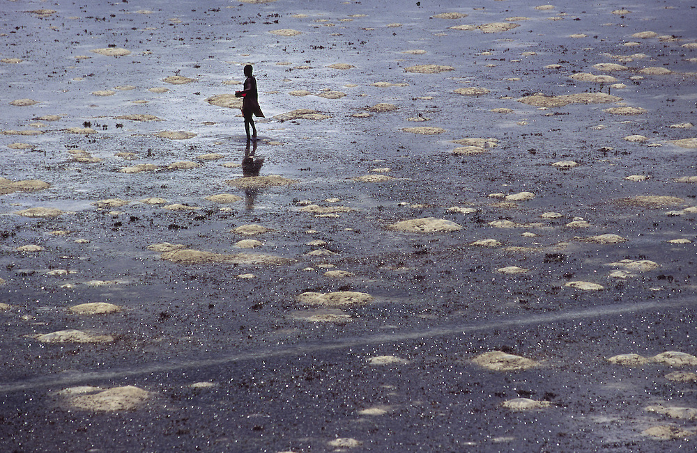 Boy catching clams and mussels during low tide in Ilha de Mozambique
