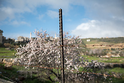 1 March 2020, Tuqu, Palestine: A fence closes off a field in Tuqu.