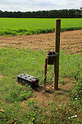 Electric fence protecting carrot crop, Sutton, Suffolk, England,UK