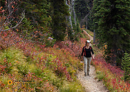 Hiking on the Alpine Trail in autumn in the Jewel Basin hiking Area of the Flathead National Forest, Montana, USA MR
