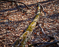 Log with moss at the Sourland Mountain Preserve. Winter Nature in New Jersey. Image taken with a Nikon D3x camera and 80-400 mm VR lens.