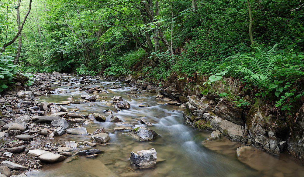 Zbojsky Potok Creek in Poloniny National park, Western Carpathians, Eastern Slovakia, Europe