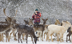 © Licensed to London News Pictures. 24/01/2021. London, UK. A visitor to Bushy Park in south west London takes a phone photograph of a herd of young deer as they experience the snowy conditions. A band of snow is crossing the south east this morning as temperature remain just above freezing. Photo credit: Peter Macdiarmid/LNP