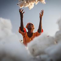 Senegal: cotton