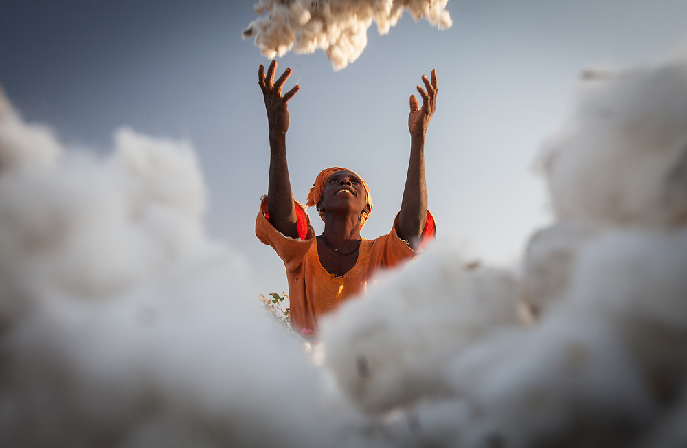 Khady Waylie, a cotton farmer in Sitaoulé Bananding, throws freshly picked cotton onto a heap. The harvest is a celebration that marks the end of a season's hard work. Khady grows cotton that is certified Fairtrade and exported by FNPC.