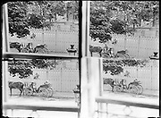 time lapse reportage of man waiting photographed on a glass negative using one plate Paris 1900