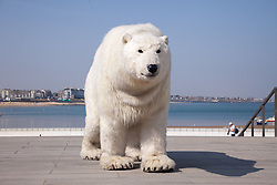 @Licensed to London News Pictures 26/07/2018. Margate, Kent. Paula the Polar Bear appears at Turner Contemporary gallery today and during the summer  to highlight climate change and how humans co-exist with animals. Paula the Polar Bear, a life-size puppet, will be roaming around the gallery and specific points in and around Margate during July and August.Photo credit: Manu Palomeque/LNP