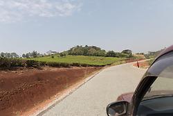 Tea Field & Roadway