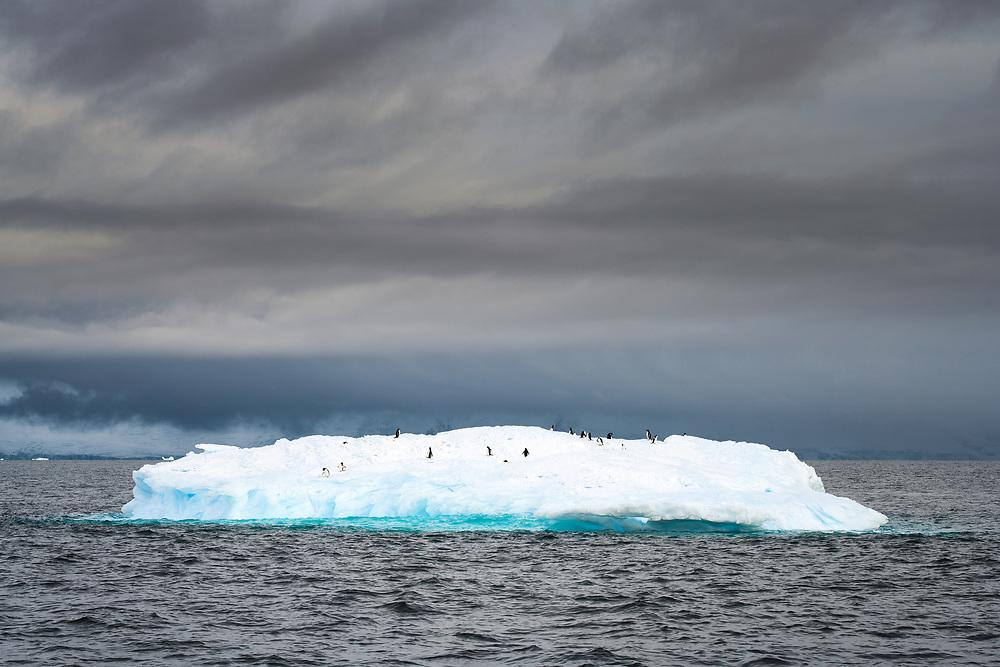 Penguins on the iceberg, Antarctica