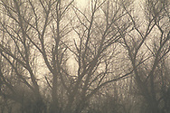 Barren tree branches in riparian habitat, San Luis National Wildlife Refuge, near Los Banos, Merced County. California