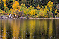 Reflections of aspen trees during the autumn season in Lost Lake Slough of the West Elk Mountains, Colorado.