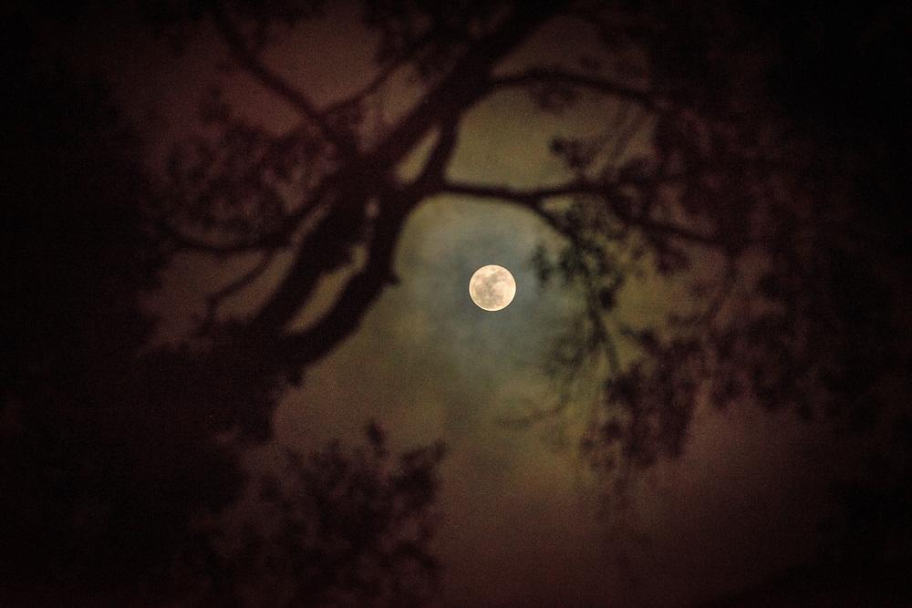 Suburban moonrise before the winter solstice, Houston, Texas