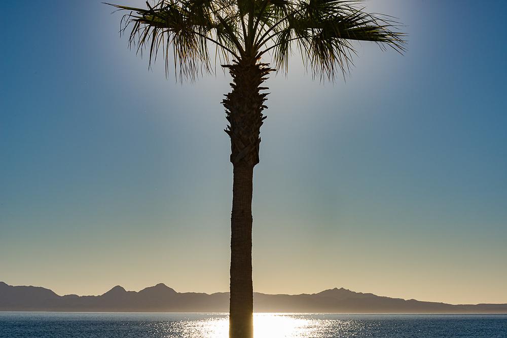 Palm tree along the Malecon, morning light, February, Sea of Cortez, Loreto, Baja, Mexico