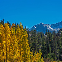 Fall colored aspens illuminate the steep mountain slopes above Bishop Creek Canyon in the Eastern Sierra Nevada near Bishop, California.  Mounts Haeckel and Mendel rise in the background.