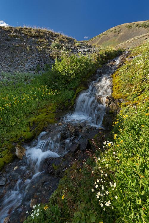 Alpine stream flowing through a meadow high in Oregon's Wallowa Mountains.