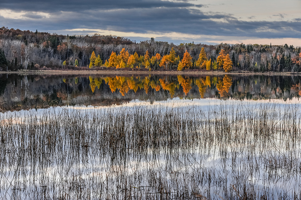 Schoolcraft Lake, tamarack trees, afternoon light, October, Hubbard County, Minnesota, USA