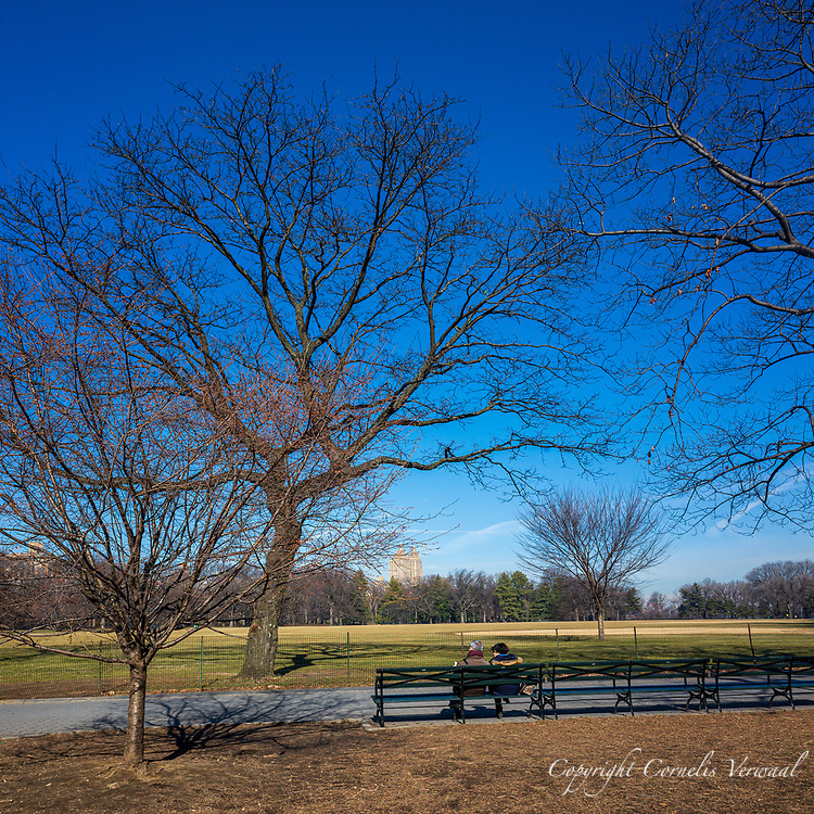 A young Cherry Tree and an old Honeylocust tree at The Great Lawn in Central Park