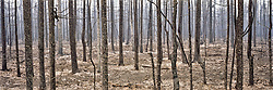 Wildfire burn in Central Yukon