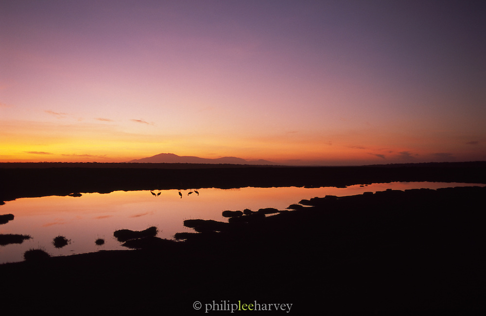 The tranquil landscape of the Serengeti National Park at first light, Tanzania