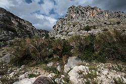 Gargano, percorso roccioso a Monte ai piedi di Monte Sant'Angelo