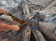 Following a full day in the jungle, Deonicio Nate came back from a successfull hunt with 3 South American coatis and an Armadillo. His family is preparing and eating the animals, a welcomed source of protein.