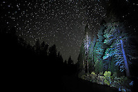 Night Sky and Illuminated Conifers along the banks of the Metolius River<br /> <br /> Shot in Oregon, USA