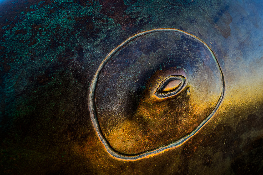 Eye of a whale sculpture along the Malecon, evening light, February, La Paz, Baja, Mexico