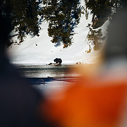 Clients watch a grizzly bear catching dinner in the Hayden Valley during winter in Yellowstone.