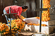 A man decorates a gravesite of a family member with marigolds for the Day of the Dead festival October 31, 2017 in Tzintzuntzan, Michoacan, Mexico.
