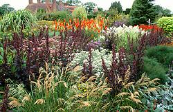 Looking towards the house from the High Garden - Stipa splendens, Atriplex hortensis, Kniphofia uvaria 'Nobilis' & Anaphalis margaritacea (A.yedoensis)
