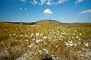 Santana do Riacho_MG, Brasil...Flores no Alto Palacio no Parque Nacional da Serra do Cipo...Flowers in Alto Palacio in the Serra do Cipo National Park...Foto: JOAO MARCOS ROSA / NITRO