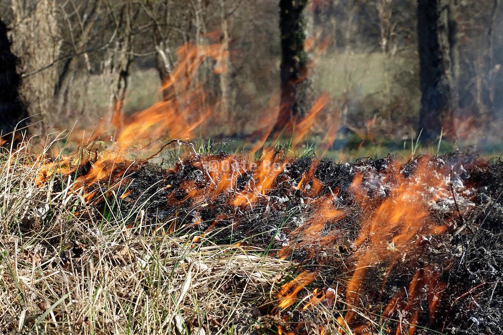 roadside grass burning