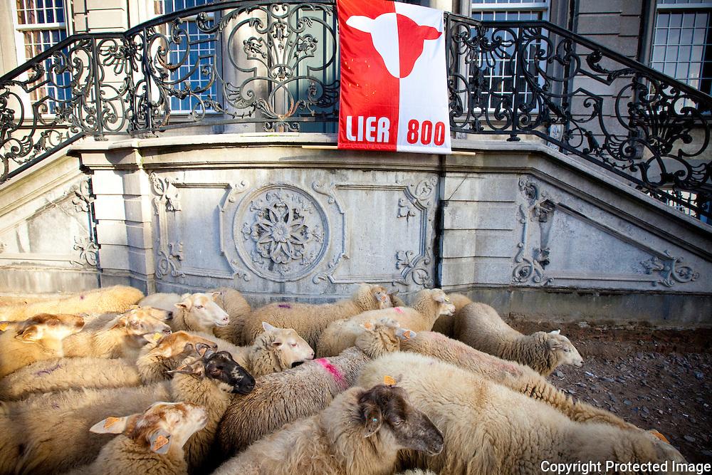370590-naar aanleiding van 800 jaar lier wandelen schapen door de stad met hun schaapsherder-grote markt lier