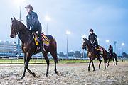 November 1-3, 2018: Breeders' Cup Horse Racing World Championships. Mendelssohn